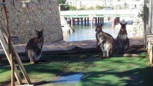 kangaroo park in malaga