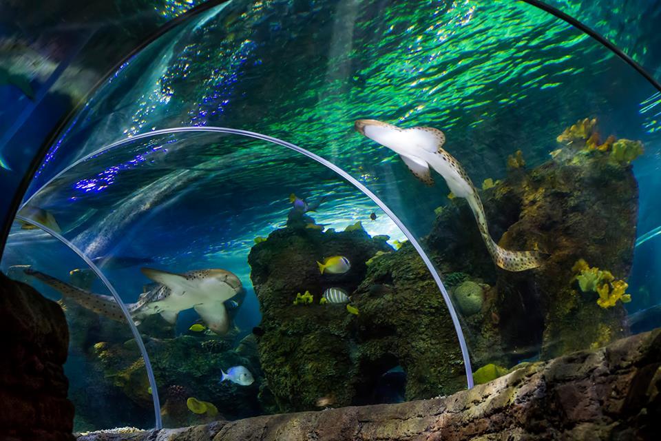 sea life benalmadena marbesol