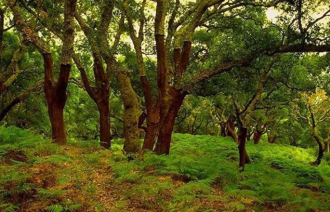 parque natural de los alcornocales marbesol